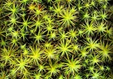 Theres Just Something Awesome About Sphagnum Moss Close Up No 8738325486 L
