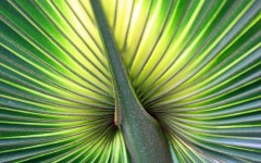 Kew Gardens001