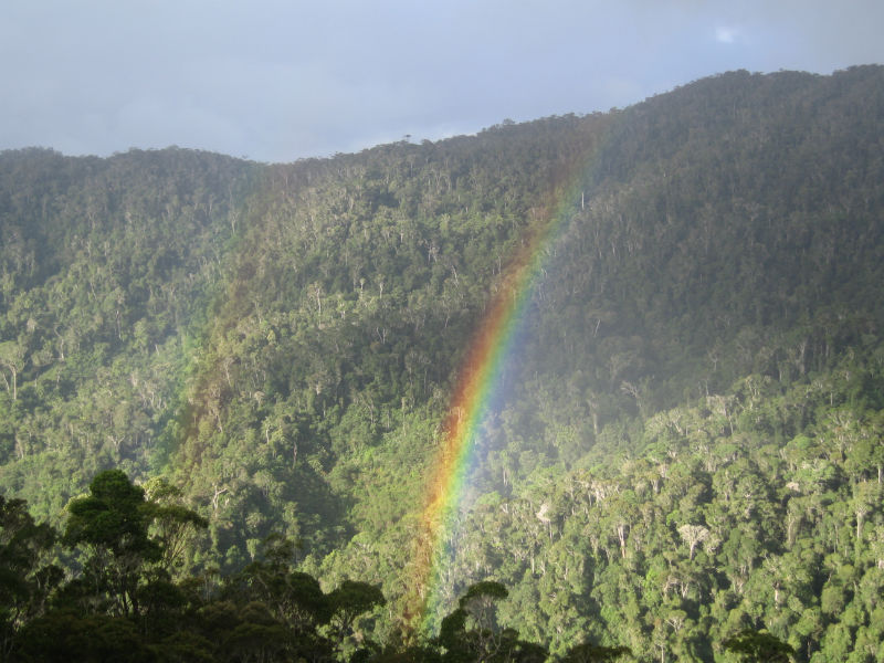 Forest Pic Rainbow W960 H600