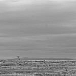 Friday Photo: African Plains