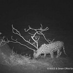 Camera Trap Images from Oman