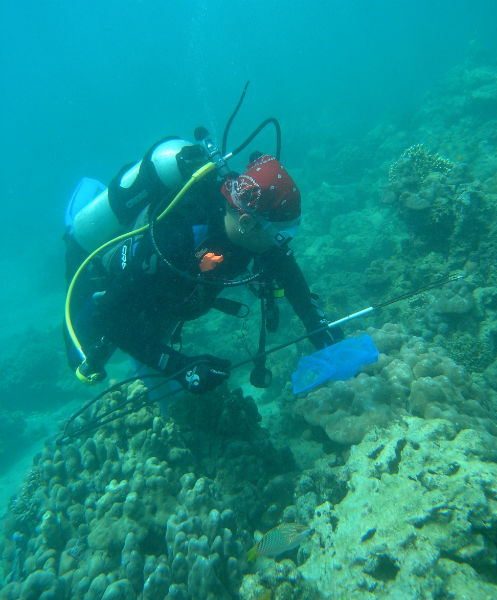Conservation on Fiji's Reefs