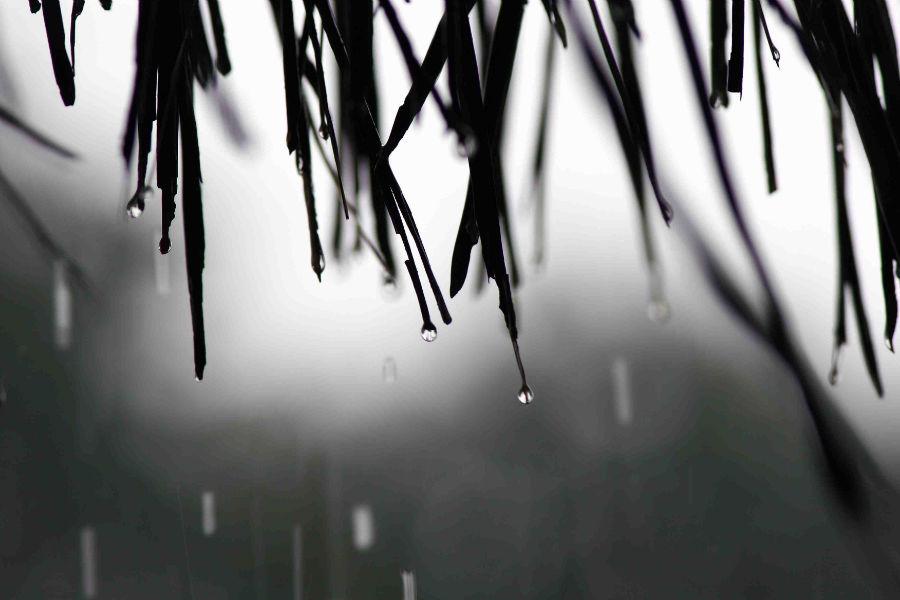 Rain W960 H600