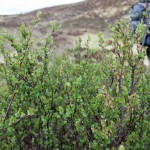 Trees for Life: Restoring the Caledonian Forest
