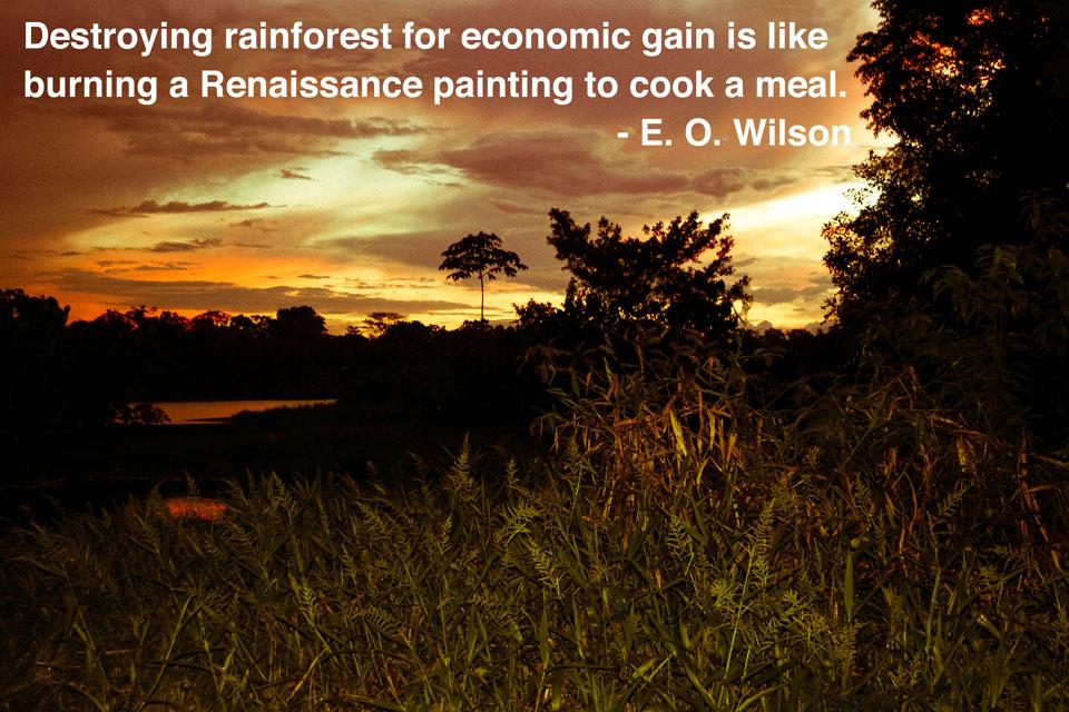 Amazon Rainforest EOWilson Quote