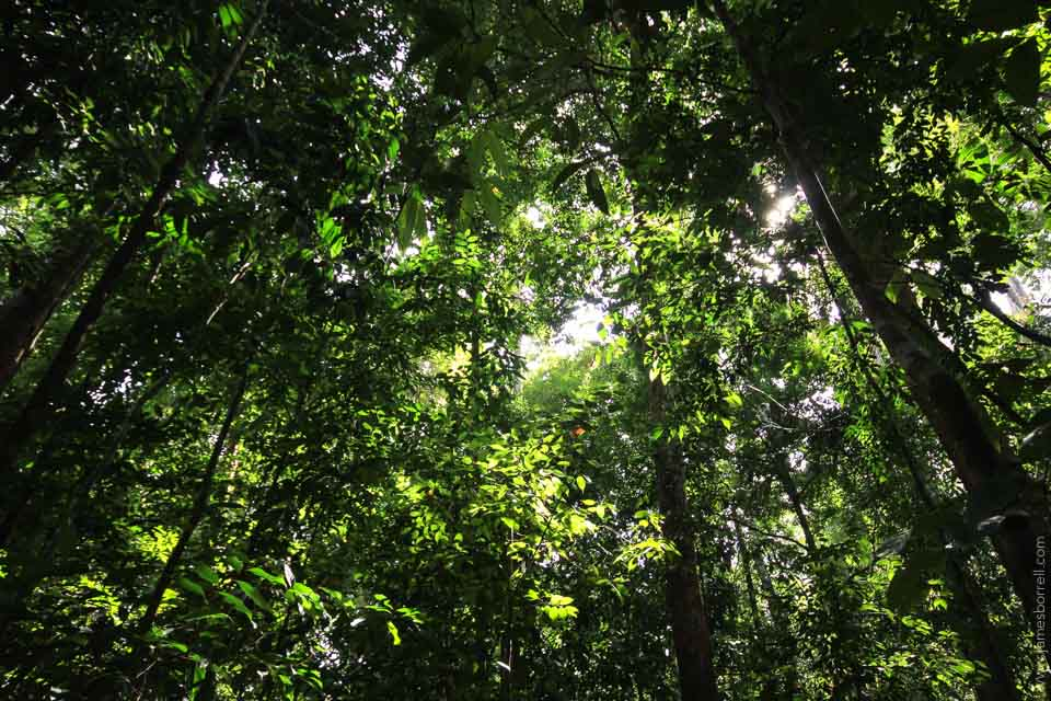 Tree Planting and Forest Conservation Charities - Dr  James
