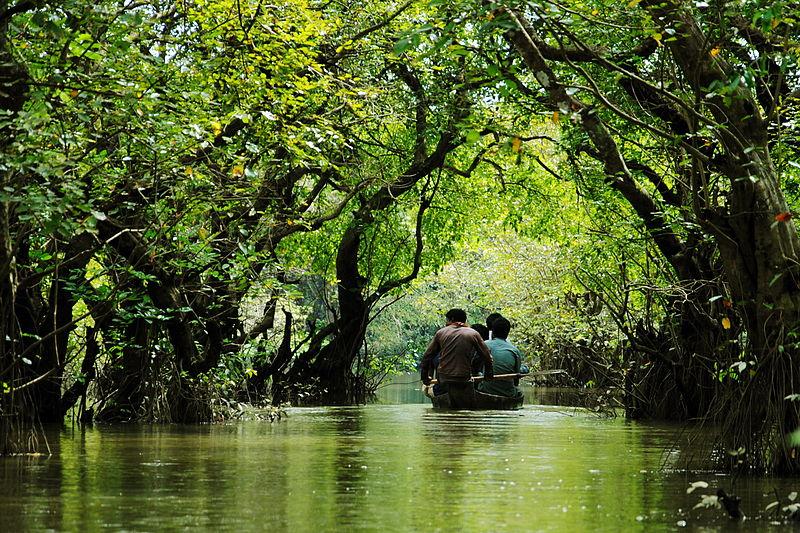 Ratargul Swamp Forest Sylhet.
