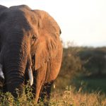 Paying the Price for Conservation in Tanzania