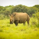 Does Swaziland Hold the Secret to Tackling Rhino Poaching?