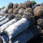 Tackling deforestation in Northern Zambia with WeForest