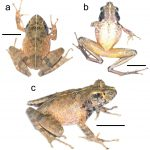 A New Species of Frog from Expedition Angano!